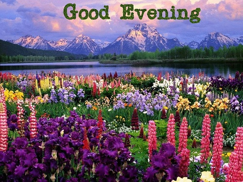 Best Good Evening Sms