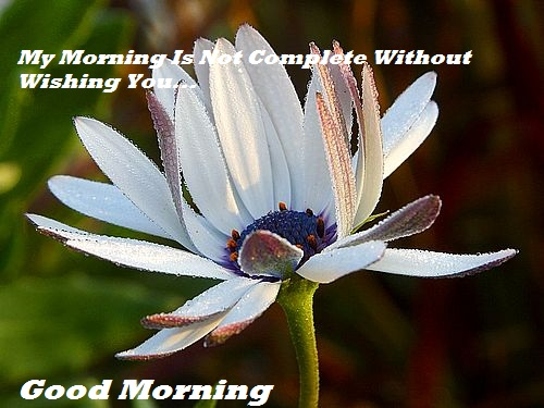 good morning wallpaper Sms