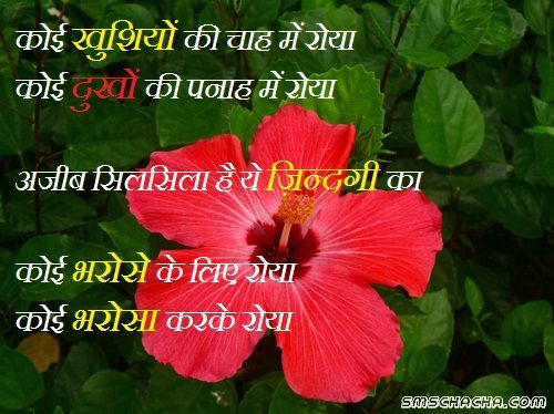 good night Whatsapp Shayari Wallpaper Sms Trust